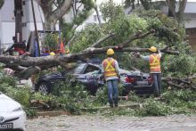 Five-storey-tall tree falls in Hougang carpark, damaging four vehicles; no injuries reported