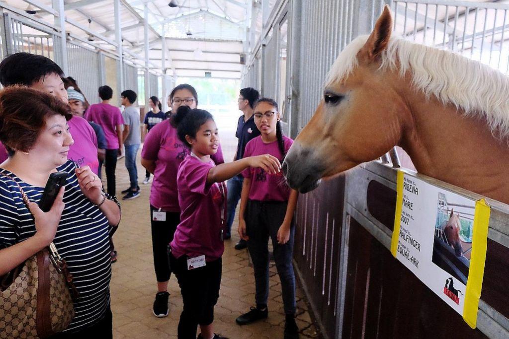 Terapi 'belajar' dengan kuda