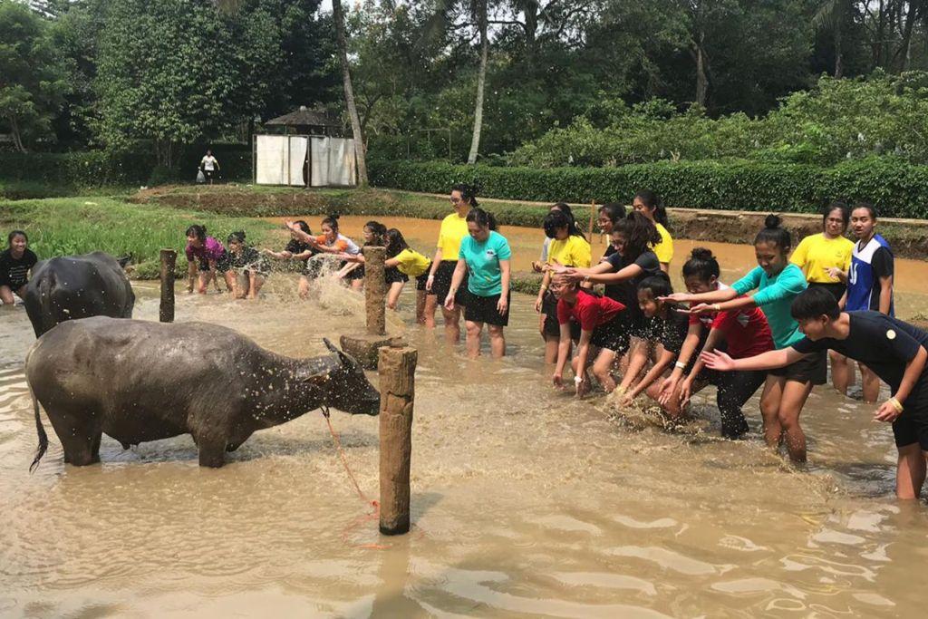 DAH MANDI?: Para pelajar berpeluang memandikan kerbau di Taman Mekarsari. - Foto ihsan FARAH SUHAIMI SAAT