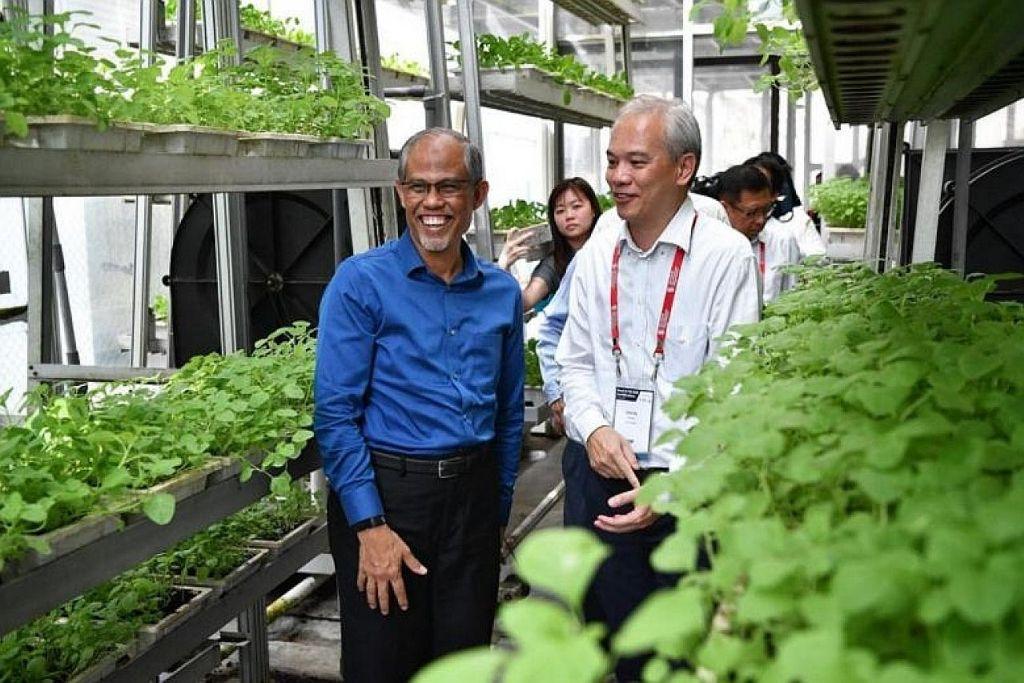 KEBUN VERTIKAL: Pengasas Sky Greens, Encik Jack Ng (kanan), membawa Encik Masagos Zulkifli melawat prasarana kebun vertikal Sky Greens. – Foto BH oleh CHONG JUN LIANG